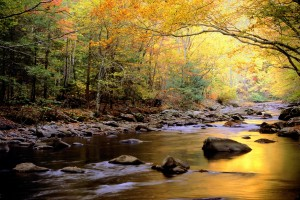 Great-Smoky-Mountains-National-Park-Tennessee