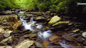 Stream-Along-Alum-Caves-Bluff-Trail-Great-Smoky-Mountains-National-Park-Tennessee