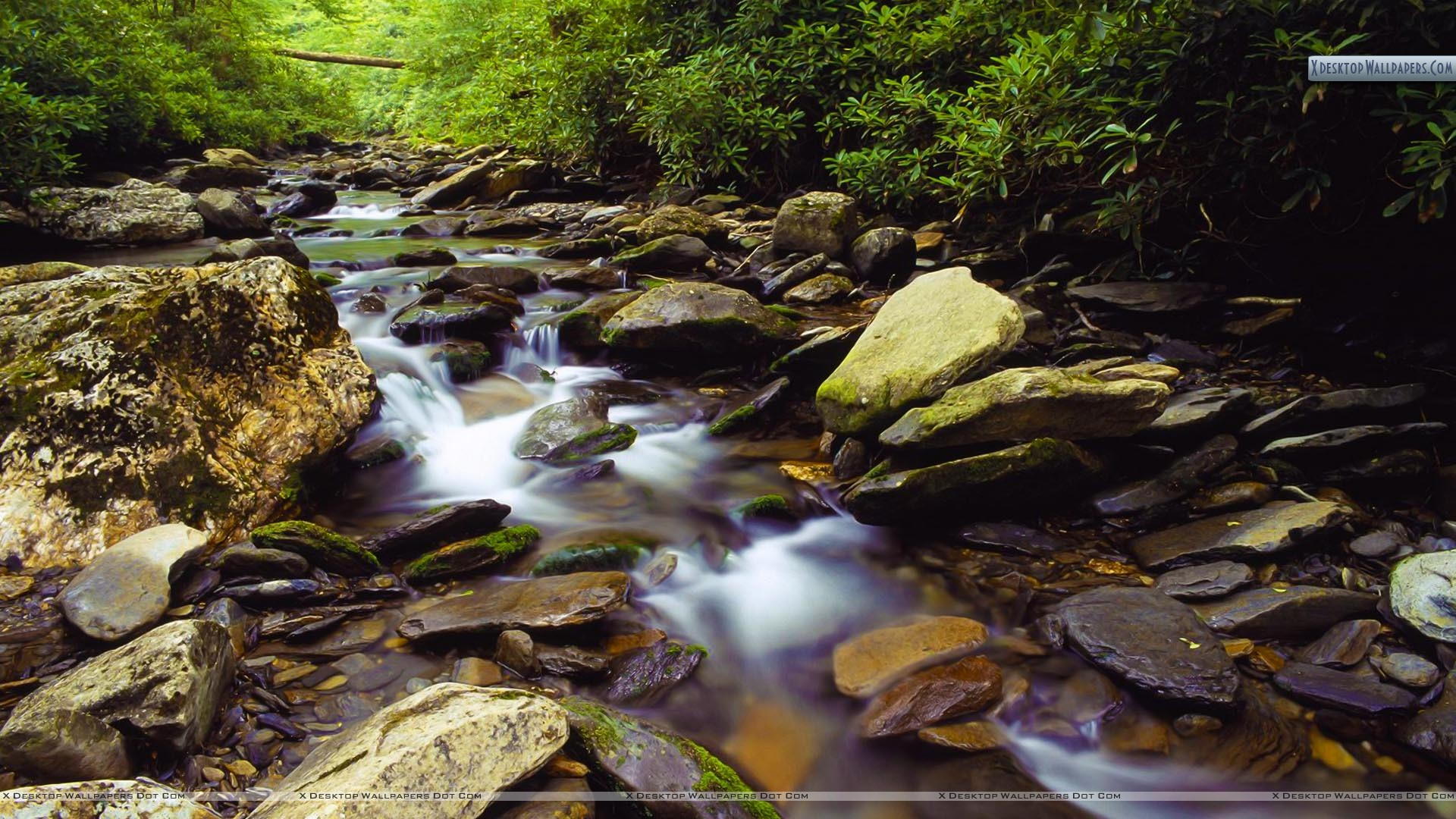 Great Smoky Mountain Streams All Now Open For Fishing Gatlinburg Tn Area Real Estate Homes